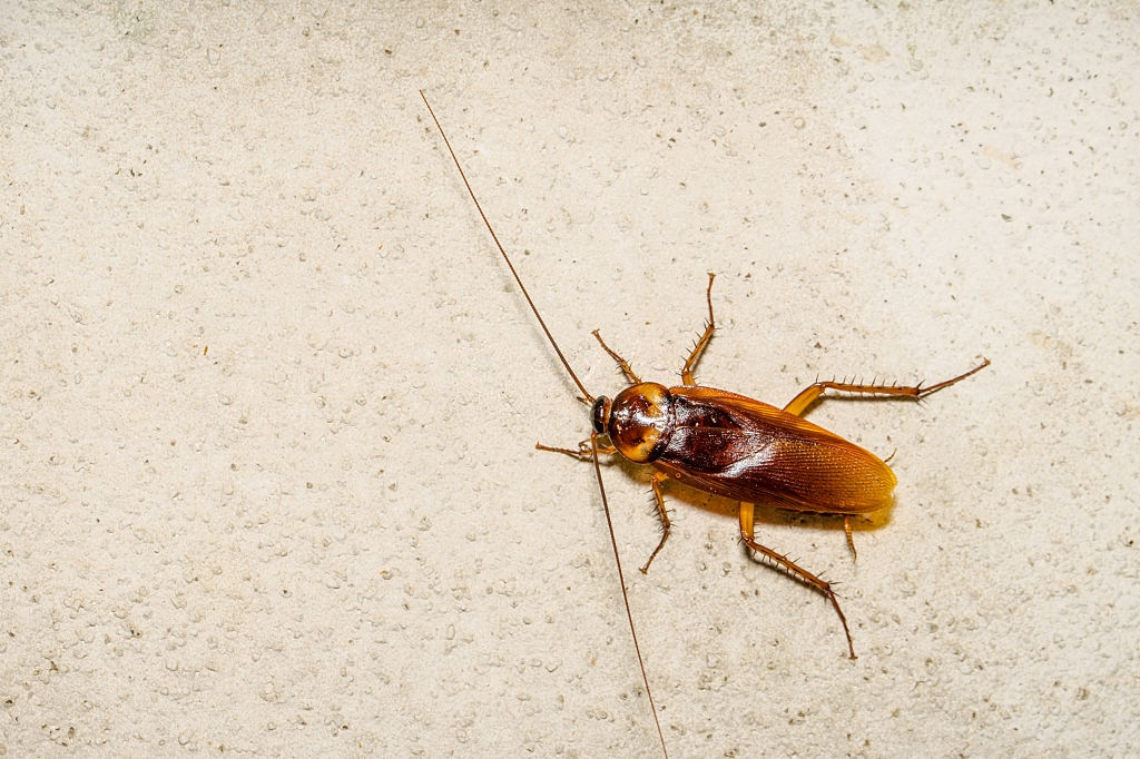 Cockroach Control, Pest Control in Loughton, High Beach, IG10. Call Now 020 8166 9746
