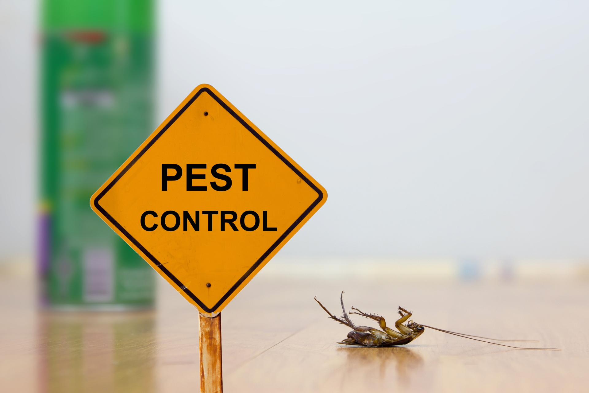 24 Hour Pest Control, Pest Control in Loughton, High Beach, IG10. Call Now 020 8166 9746